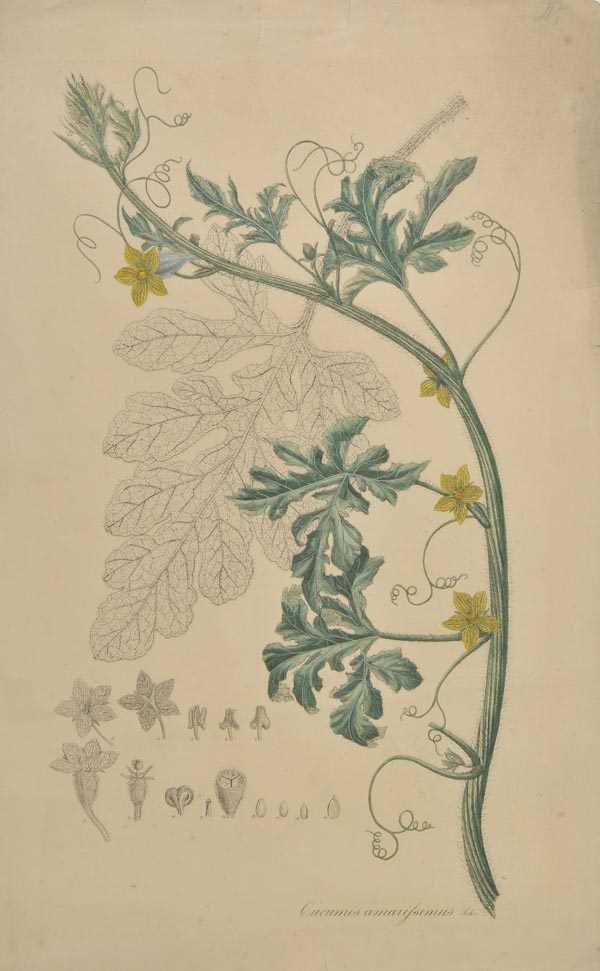 Lot 12-Botanical illustrations.