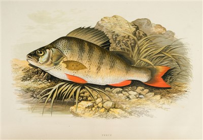 Lot 386 - Houghton (William). British Fresh-Water Fishes, [1879]