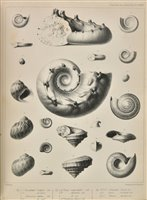 Lot 164 - Geological Society.