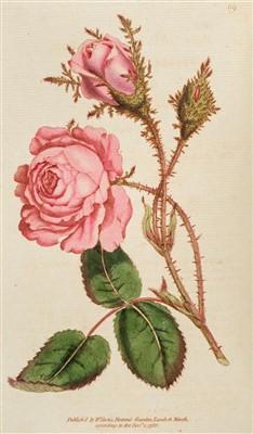 Lot 302 - Curtis (William). The Botanical Magazine or Flower-Garden Displayed, 1787-1794