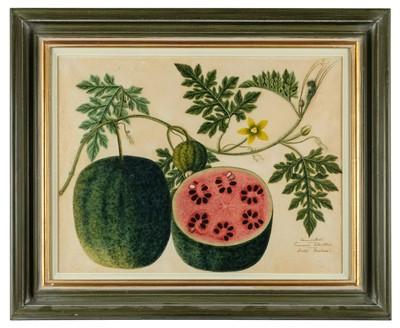 Lot 409-Company School. Mandikai Cucumis Citrullus, Water Melon, circa 1825