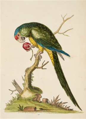 Lot 204-Edwards (George). Natural History of Uncommon Birds, 1743-51