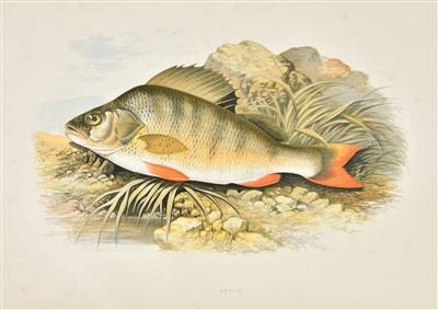 Lot 70-Houghton (Rev. W.). British Fresh-Water Fishes, 1879