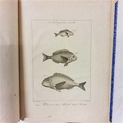 Lot 37-Sonnini (Charles Sigisbert). Voyage en Grèce et en Turquie, [atlas volume only], 1801