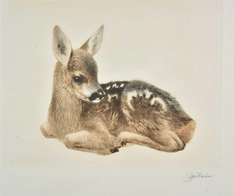 Lot 32-Meyer-Eberhardt (Kurt, 1895-1977). Young Roe Deer and Young Donkey