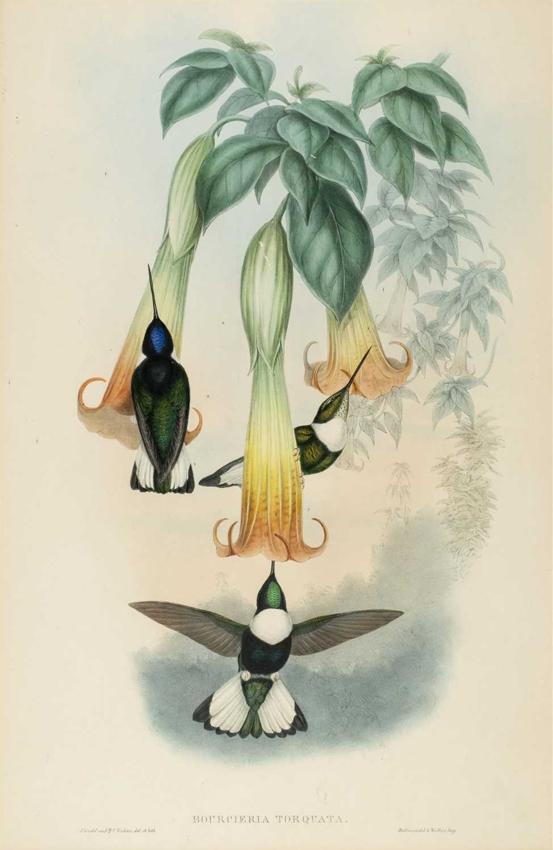 Lot 78 - Gould (J. & Richter H. C.). Humming Birds, [1850]