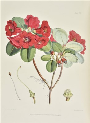 Lot 34-Hooker (Joseph Dalton). The Rhododendrons of Sikkim-Himalaya, 1st edition, 1849