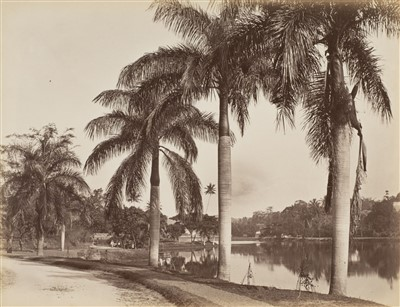 Lot 36-Ceylon. Scowen & Co. A group of 8 views of Ceylon, c. 1880