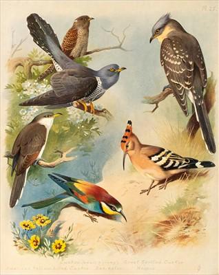 Lot 15-Thorburn (Archibald). British Birds, 4 volumes, 1915 - 1916