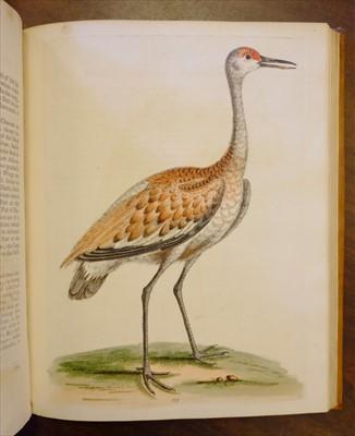Lot 54 - Edwards (George). A Natural History of Uncommon Birds, 1743-51 [i.e. 1776]