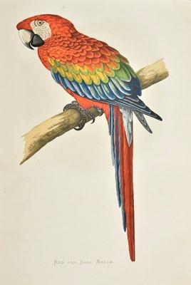 Lot 237 - Greene (William Thomas). Parrots in Captivity, 3 volumes, 1st edition, 1884-7