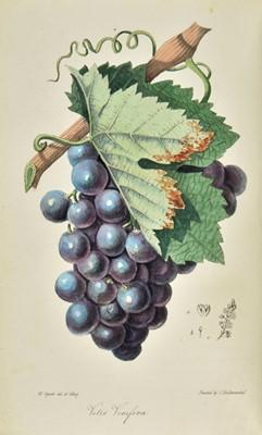 Lot 262 - Spratt (George). Flora Medica, 1st edition, 1829-30