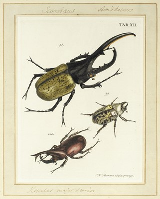 Lot 220 - Voet (J. E.). Catalogus systematicus coleopterorum, 1806, ex libris Thomas Forster (1786-1860)