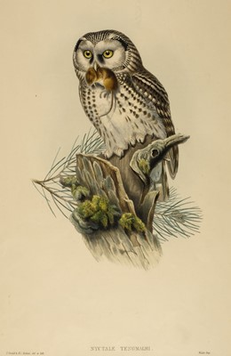 Lot 86 - Gould (J & Richter H. C.). Nyctale Tengmalmi, 1862-73