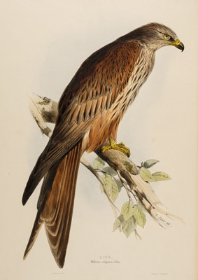 Lot 84 - Lear (Edward, 1812-1888). Kite (Milvus vulgaris), 1832-7