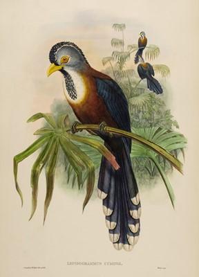 Lot 78 - Gould (John). Lepidogrammus Cumingi (Scale-Feathered Cuckoo), 1850-83