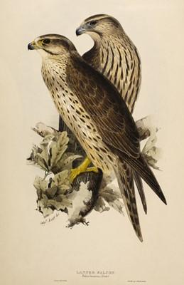 Lot 77 - Lear (Edward, 1812-1888). Lanner Falcon, 1832-7