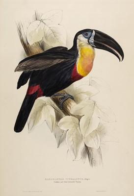 Lot 76 - Lear (Edward, 1812-1888). Ramphastos Vitellinus, 1834