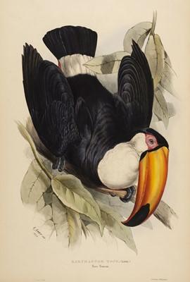 Lot 74 - Lear (Edward, 1812-1888). Ramphastos Toco, 1834