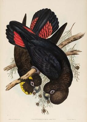 Lot 73 - Gould (John, 1804-1881). Calyptorhynchus Leachii (Leach's Cockatoo), 1848