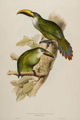 Lot 85 - Lear (Edward, 1812-1888). Pteroglossus Prasinus (Golden-Green Aracari), 1834