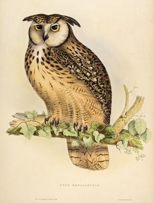 Lot 79 - Gould (John, 1804-1881). Otus Bengalensis, 1831