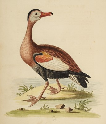 Lot 72 - Edwards (George). A Natural History of Uncommon Birds, parts 3 & 4 , 1750-1