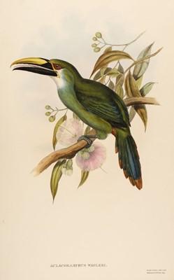 Lot 80 - Gould (John, 1804-1881). Aula Coramphus Wagleri (Wagler's Groove-Bill), 1852-5