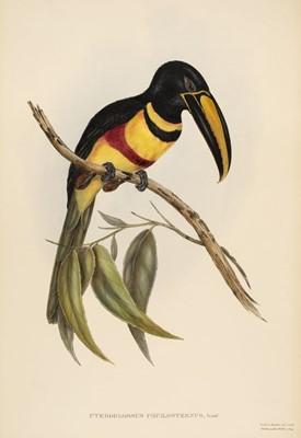 Lot 83 - Gould (John, 1804-1881). Pteroglossus Poecilosternus, 1833-4