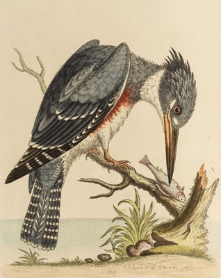 Lot 71 - Edwards (George). A Natural History of Uncommon Birds, 2 volumes, 1743 or later