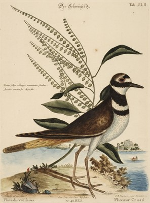 Lot 69 - Catesby (Mark). A collection of nine engravings of birds, circa 1777