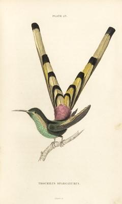 Lot 106 - Jardine (William). The Naturalist's Library, 11 volumes only, Edinburgh, London & Dublin, 1834-43