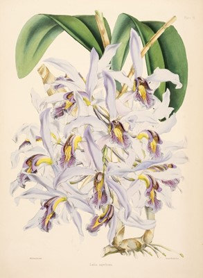 Lot 128 - Warner (Robert). Select Orchidaceous Plants. First Series, 1862-5, in original parts