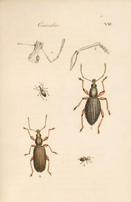 Lot 47 - Clairville (Joseph Philippe de). Entomologie Helvétique, 1st edition, 1798