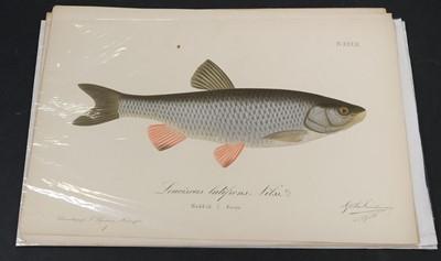 Lot 354 - Reuter (Odo Morannal & Mela, Aukusti Johana). Finlands Fiskar, 1883-93