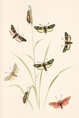 Lot 104 - Mosley (Seth Lister). Illustrations of Varieties of British Lepidoptera, 14 parts, 1878-[1885]