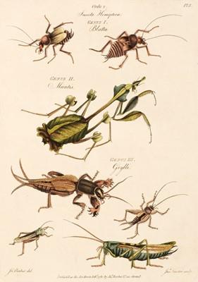 Lot 85 - Barbut (Jacques). The Genera Insectorum of Linnaeus, 1781