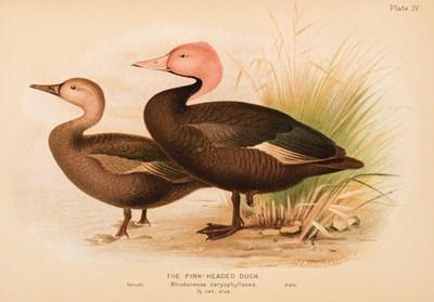 Lot 84 - Baker (Stuart) The Game-Birds of India, Burma & Ceylon, 1921-1930