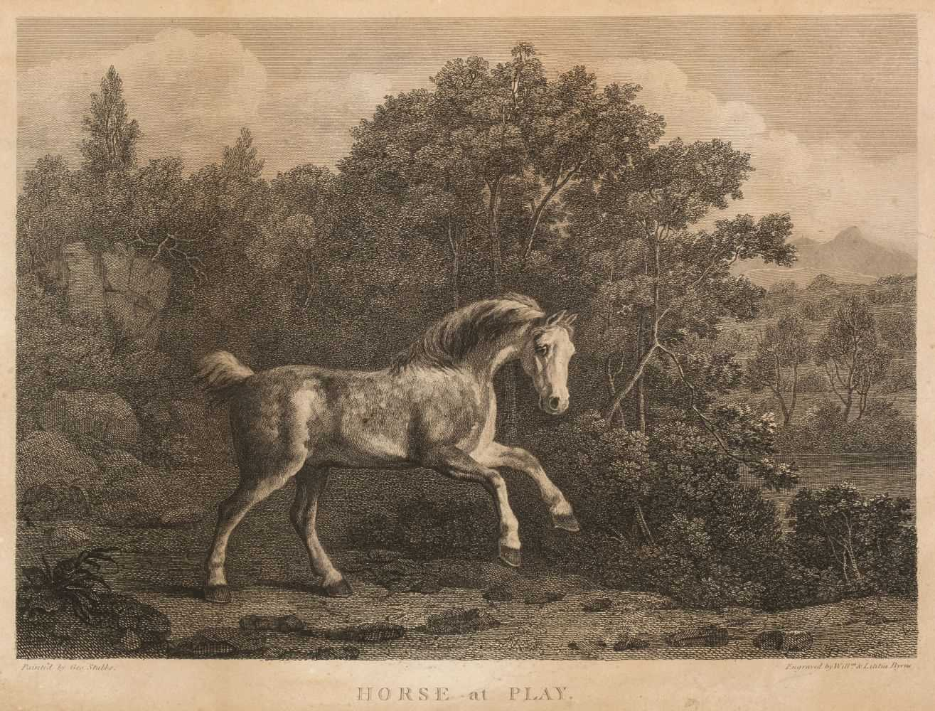 Lot 319 - Stubbs (George, 1724-1806). Horse at Play, by W. Byrne, 1795