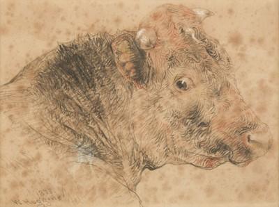 Lot 383 - Huggins (William, 1820-1884). Head of a Bull, 1873