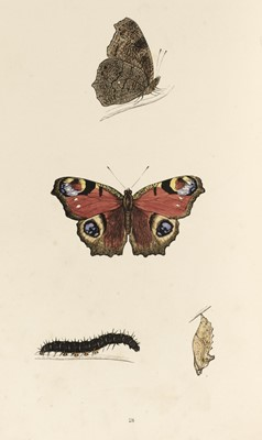 Lot 48 - Morris (F.O.) A History of British Butterflies, 1864