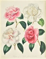 Lot 125 - Transactions of the Horticultural Society of London.